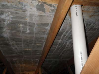 Mold in the attic.